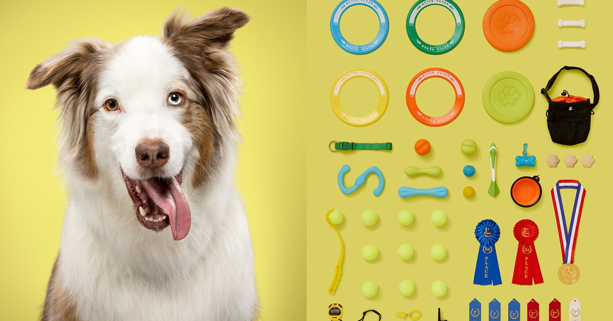 Retratos de cães e de seus pertences revelam suas personalidades