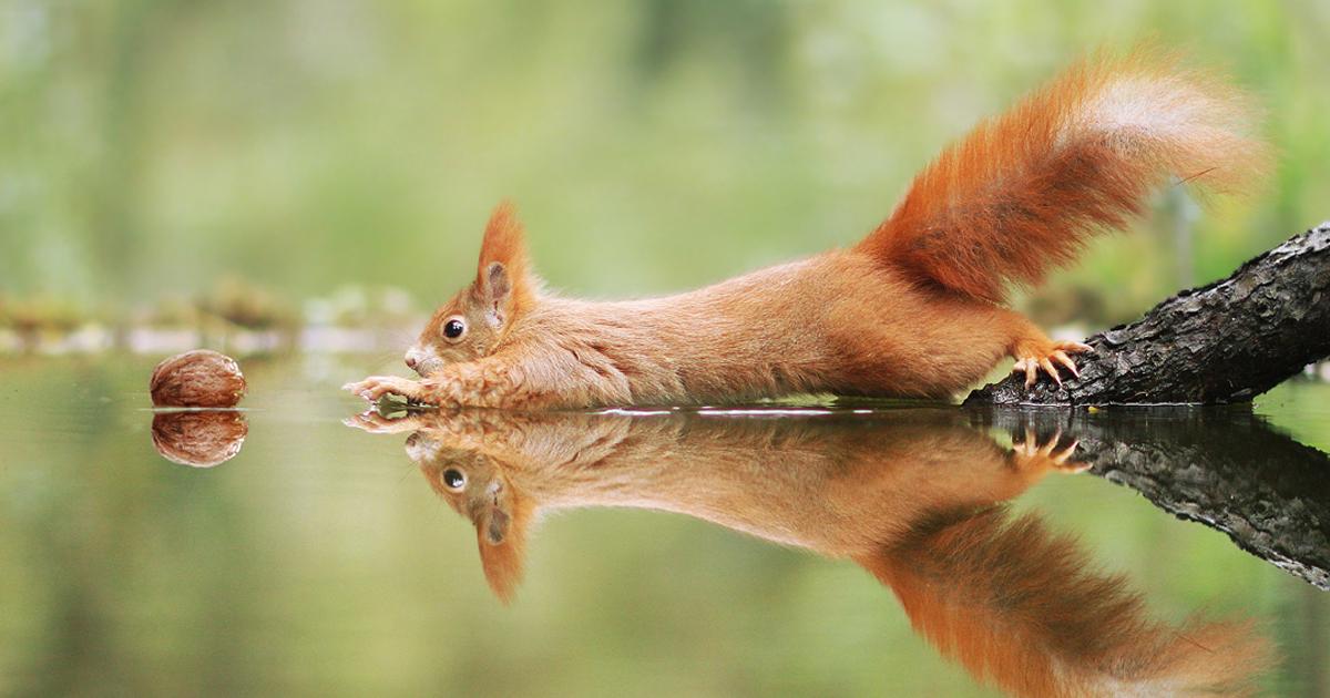 30 fotos divertidas da vida selvagem por um premiado fotógrafo austríaco