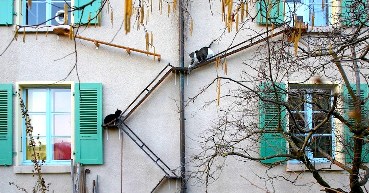 Alguns prédios na Suíça tem escadas para os gatos