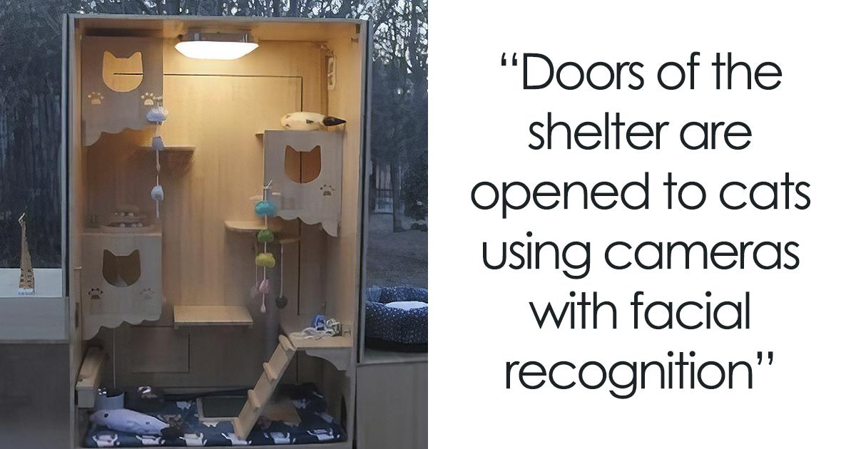 Engenheiro chinês constrói um abrigo com sistema de reconhecimento facial por inteligência artificial para gatos de rua