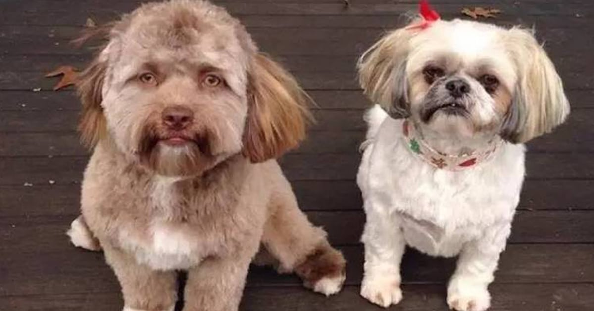 As pessoas não estão conseguindo parar de olhar para este cachorro com rosto tão humano