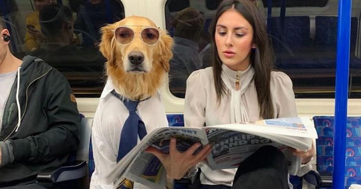 Fotógrafa transforma seu cachorro em vários personagens, e o resultado ficou muito engraçado