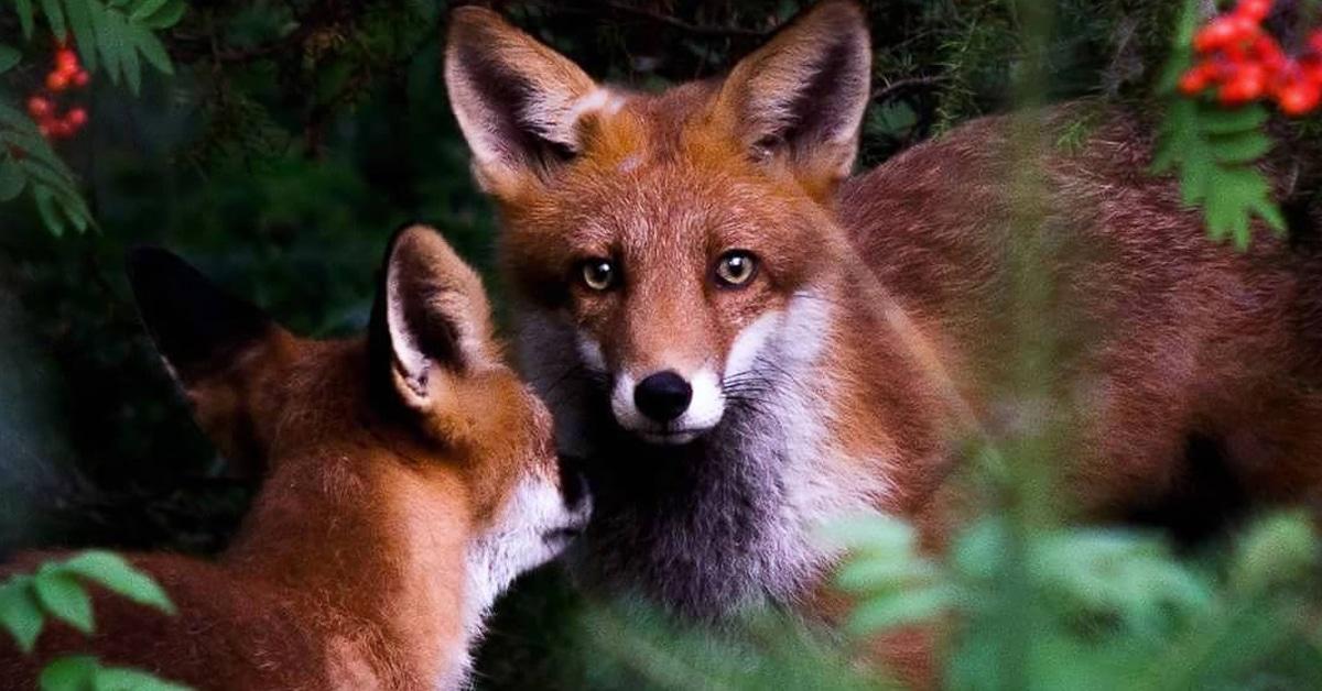 Fotógrafo captura momentos encantadores de animais na natureza