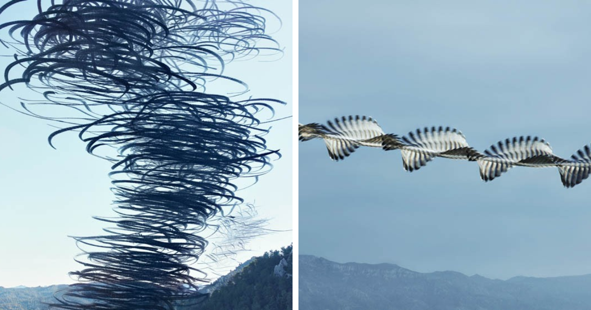 10 fotos impressionantes que capturam os padrões de vôo dos pássaros