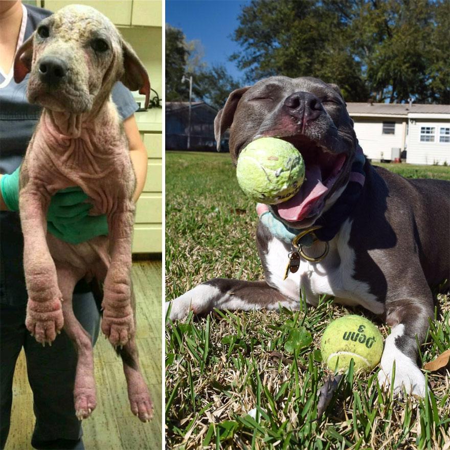 30 fotos de cães antes e depois da adoção que vão derreter seu coração