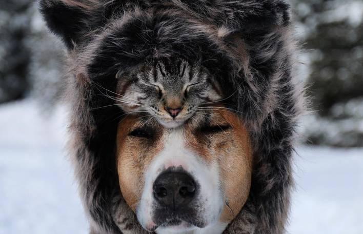 Você não vai acreditar, mas este cachorro e este gato são companheiros de viagem surpreendentes