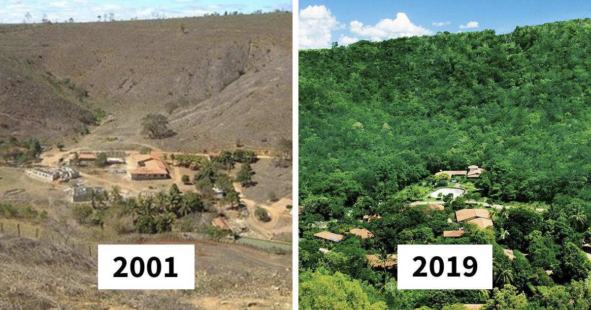 Casal de brasileiros planta 2 milhões de árvores em 20 anos, restaura floresta destruída, e até mesmo os animais voltaram