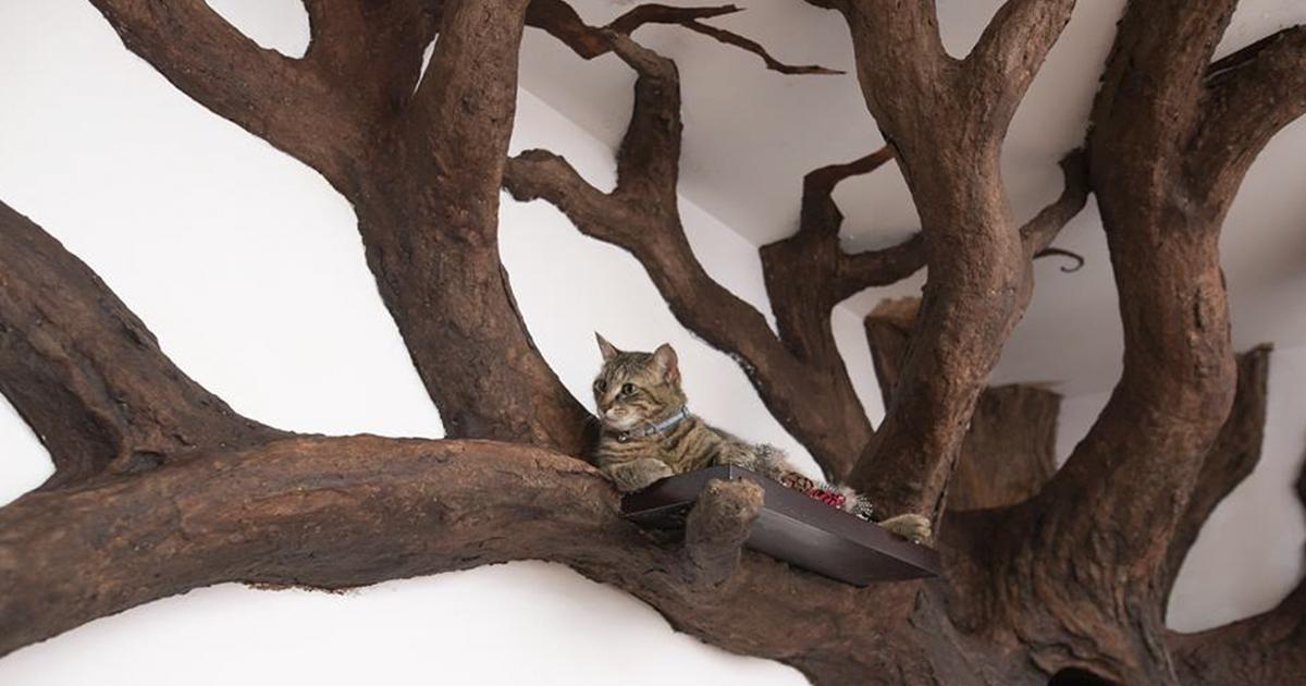 A melhor casa de gatinhos de todos os tempos é… Uma árvore. E você pode ter ela em casa.