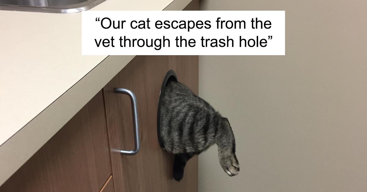 47 esconderijos que gatos engraçados encontraram para evitar o temido veterinário