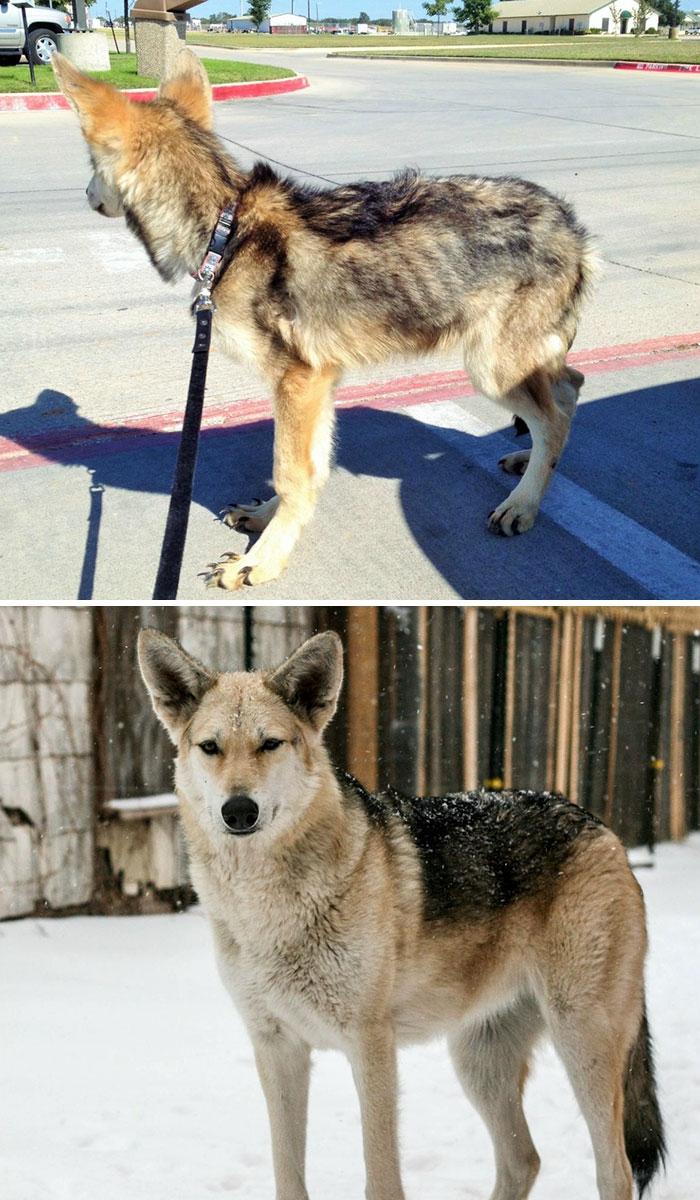 30 antes e depois incríveis de cães resgatados que nos mostram o que o amor pode fazer