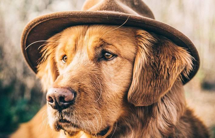 Conheça Aspen, um Golden Retriever que acompanha seus donos por rios e montanhas