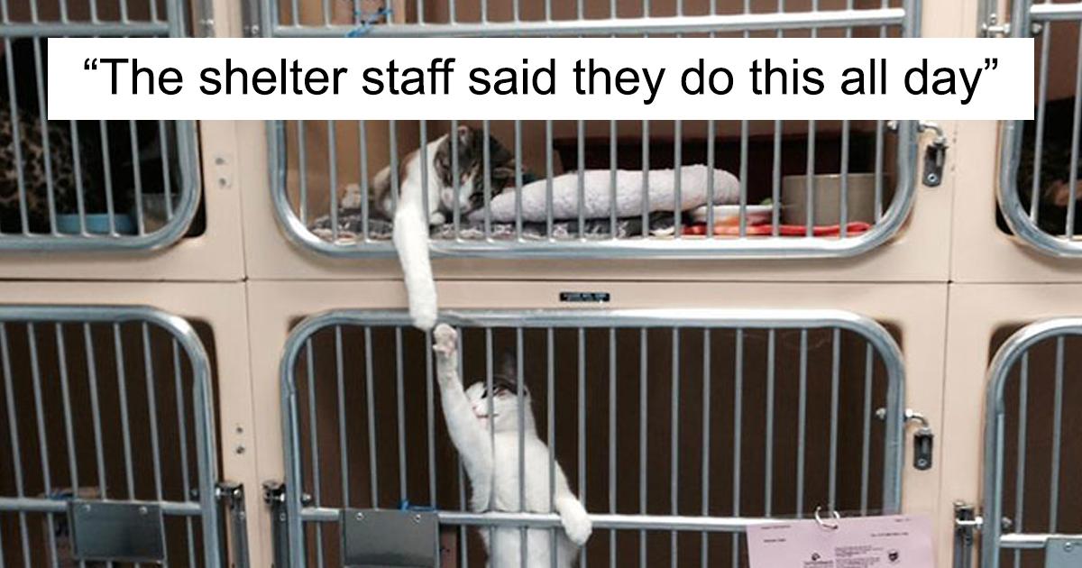 48 animais engraçados nas situações mais inesperadas em abrigos