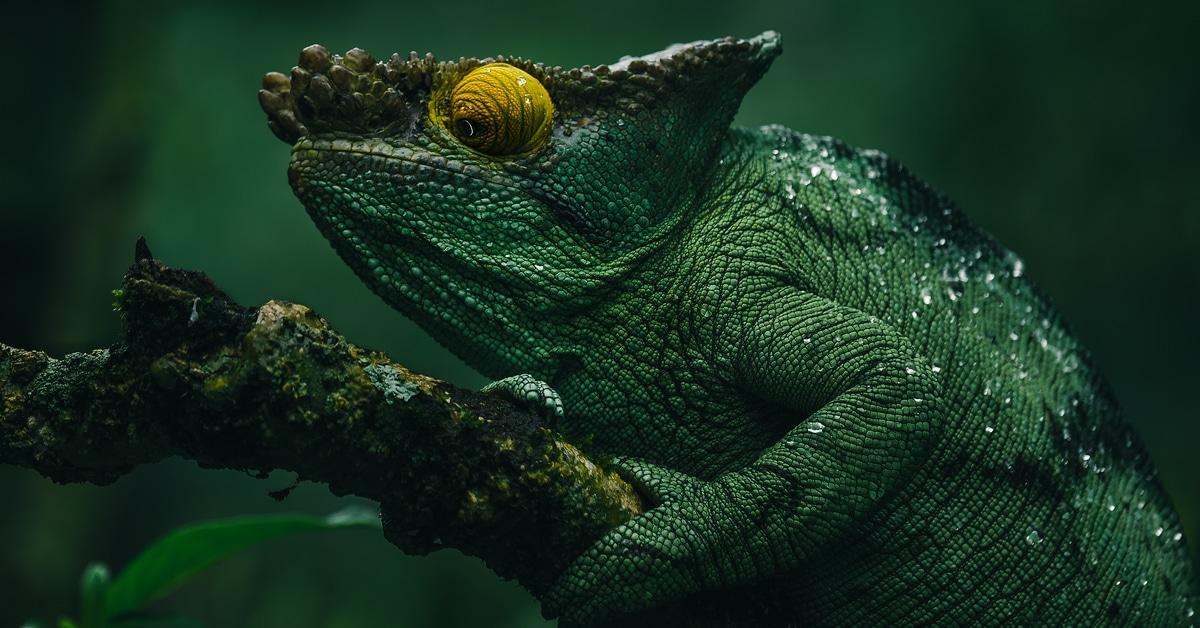 Fotos íntimas de animais selvagens mostram as criaturas maravilhosamente diversas de Madagascar