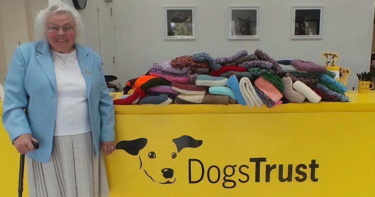 Esta senhora tricotou 450 cobertores para manter cães de abrigo aquecidos
