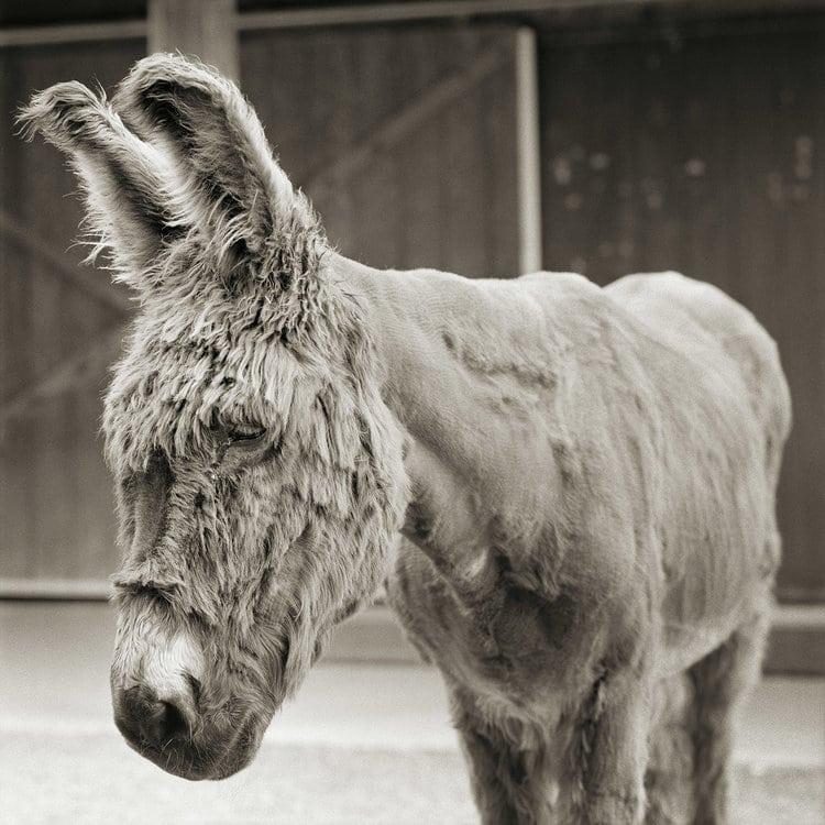 Retratos de animais resgatados que tiveram a oportunidade de envelhecer