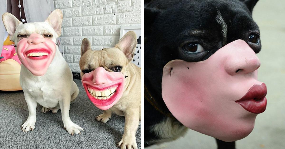 Máscaras humanas para cachorros existem e as pessoas ainda não sabem o que pensar sobre isso