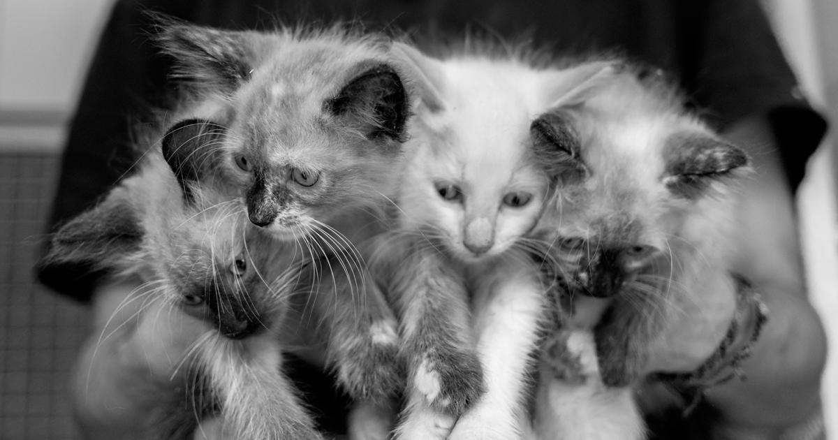 17 fotos que capturam o que é ser um voluntário neste abrigo de animais em São Paulo