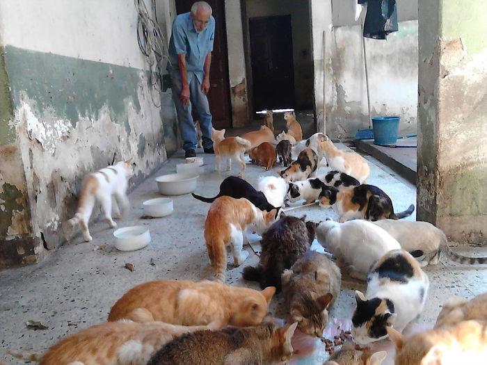 Apesar da situação do país, este venezuelano está tentando salvar gatos abandonados