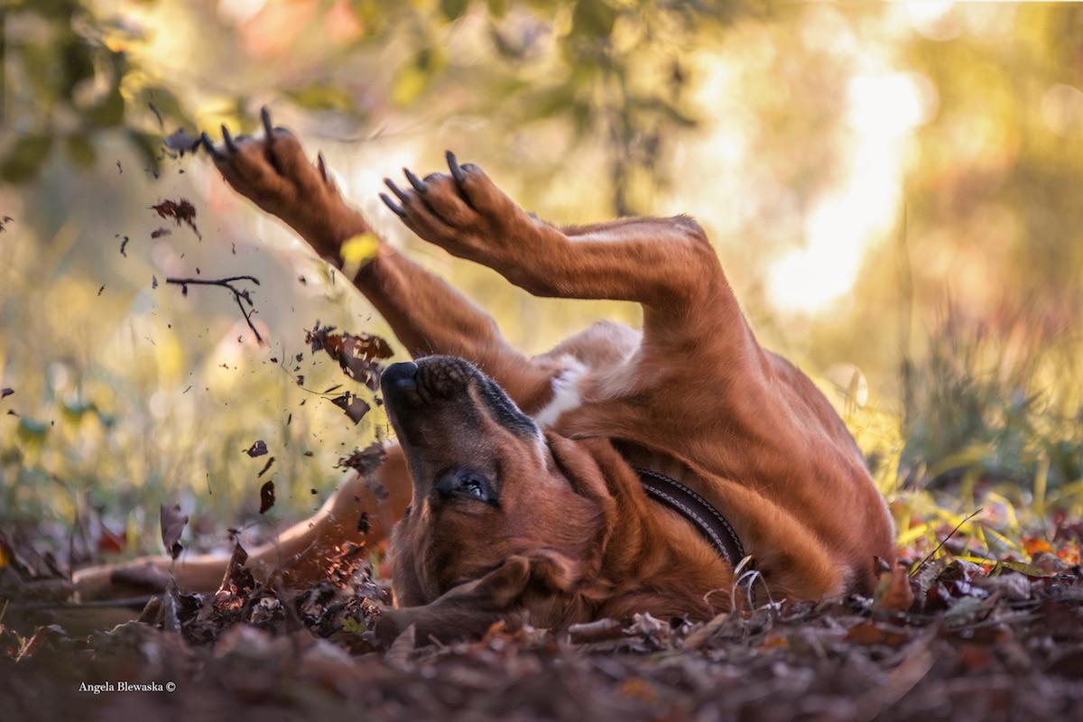 Saíram os adoráveis vencedores do Dog Photographer of the Year Contest de 2019