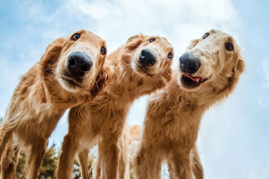 Aqui estão as 37 melhores fotos de cães de 2019. E elas são incríveis!