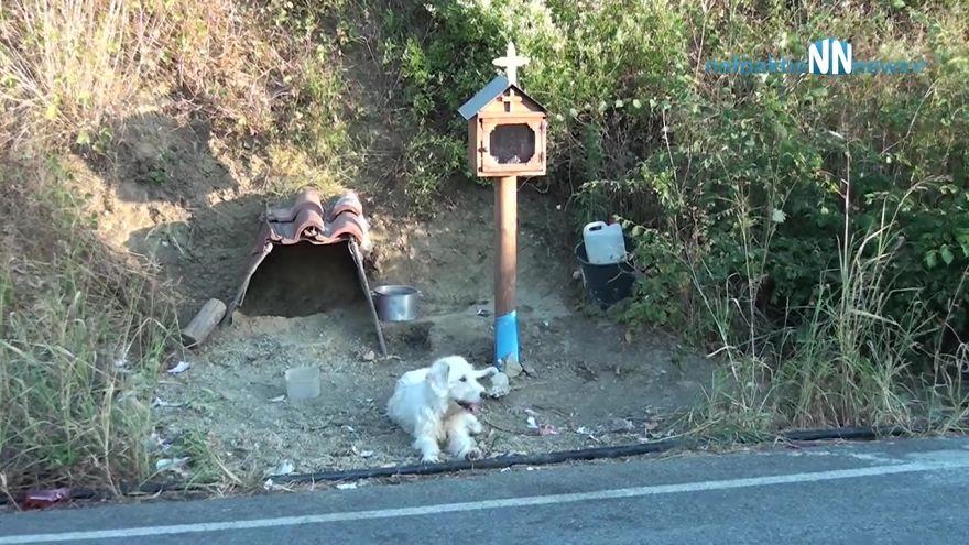 Cão se recusa a deixar o local do acidente de carro do seu dono por 18 meses e moradores locais constroem uma casa para ele