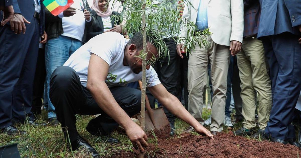 Para enfrentar as mudanças climáticas, Etiópia planta 350 milhões de árvores em 12 horas