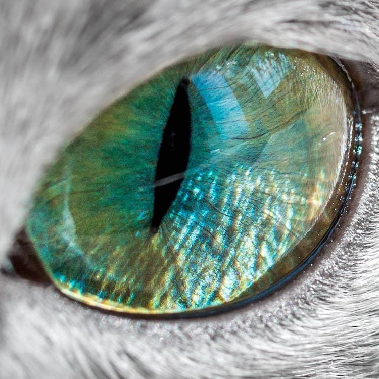 Gatas irmãs prateadas compartilham dos olhos verdes mais fascinantes