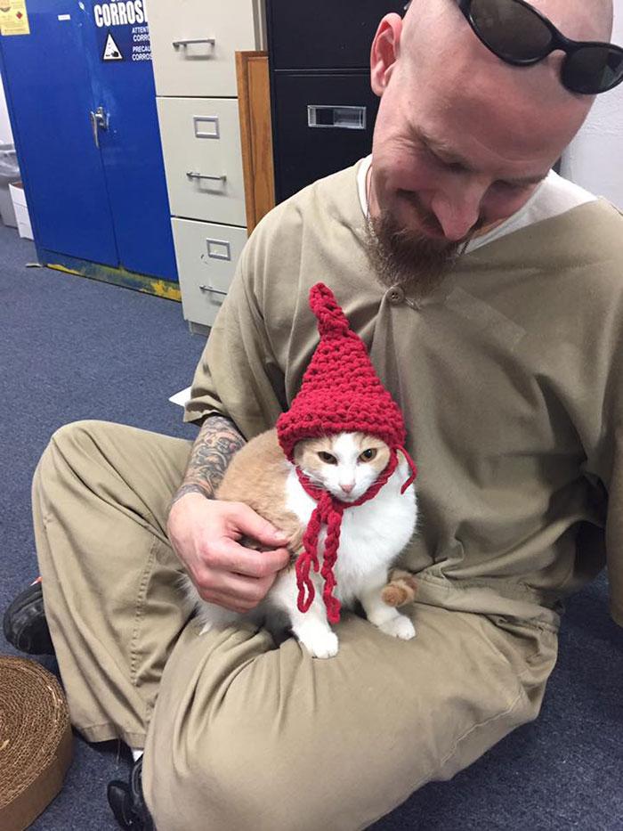 Esta prisão está reabilitando seus prisioneiros com a ajuda de gatos de abrigo