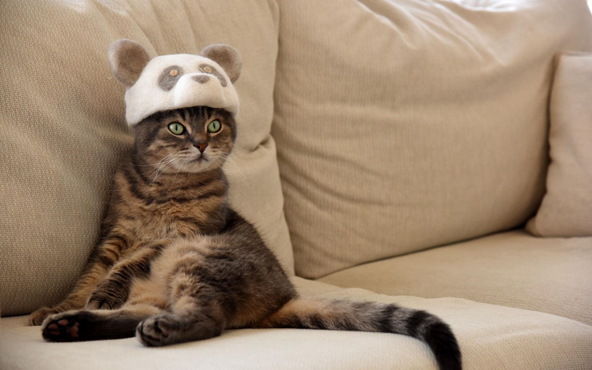 Estes 3 gatos têm um armário cheio de chapéus sob medida feitos a partir dos seus próprios pêlos