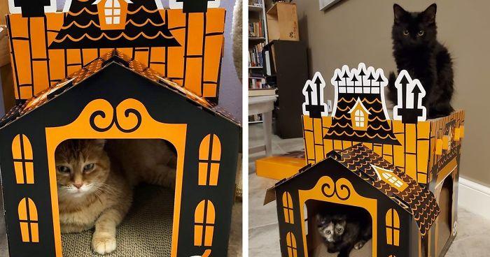 Este homem vende mini casas mal-assombradas para gatos que são perfeitas para o Halloween