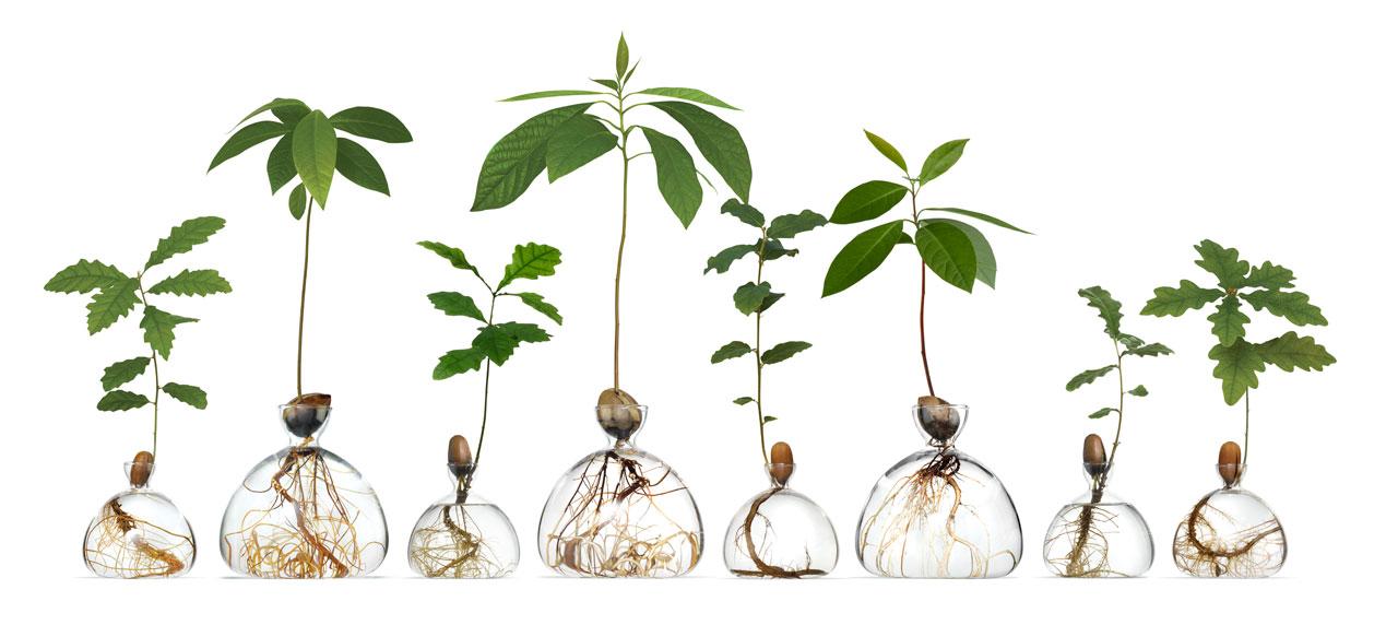 Plante árvores no peitoril da janela com esses vasos de vidro especialmente projetados do Ilex Studio