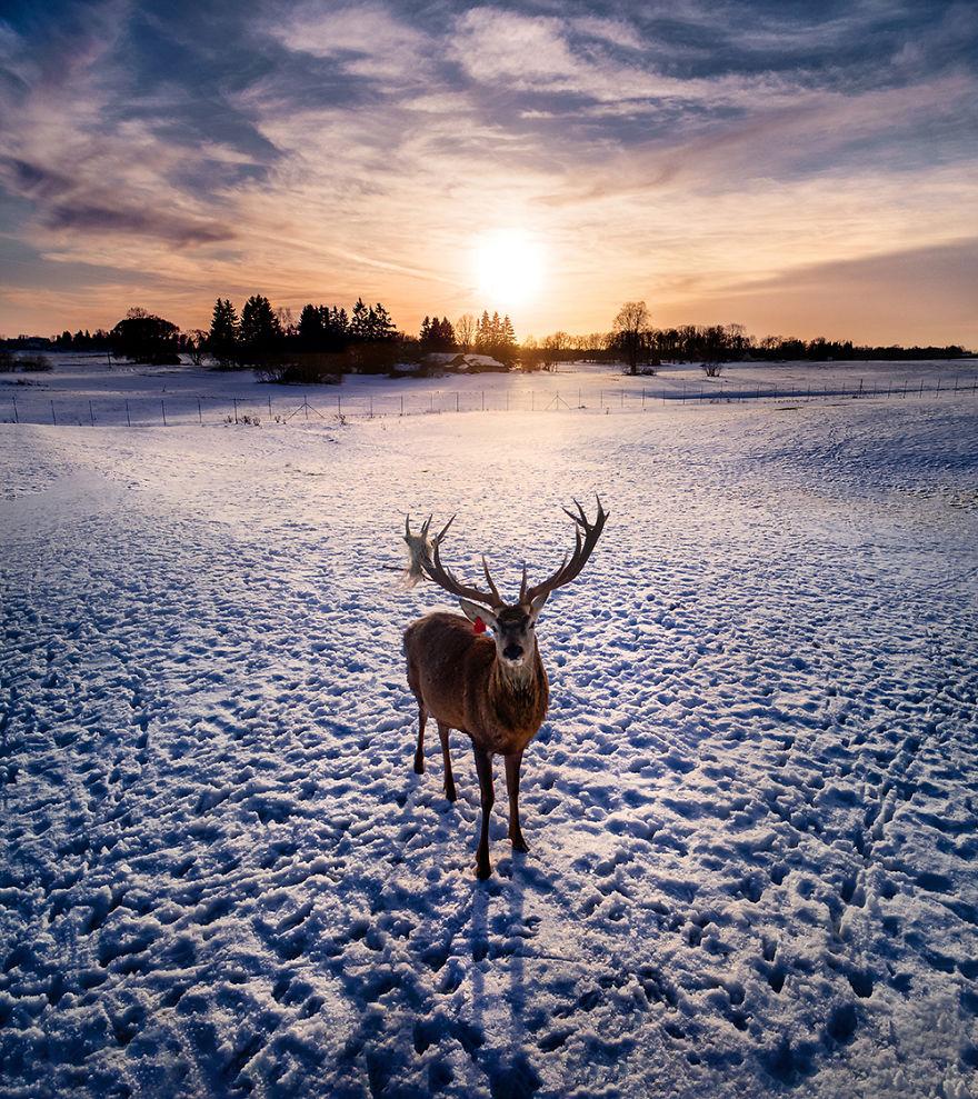 Fotografias de animais selvagens e paisagens deslumbrantes na Lituânia feitas com um drone