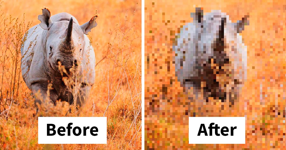 Estas fotos são compostas por tantos pixels quanto animais ainda vivos da espécie