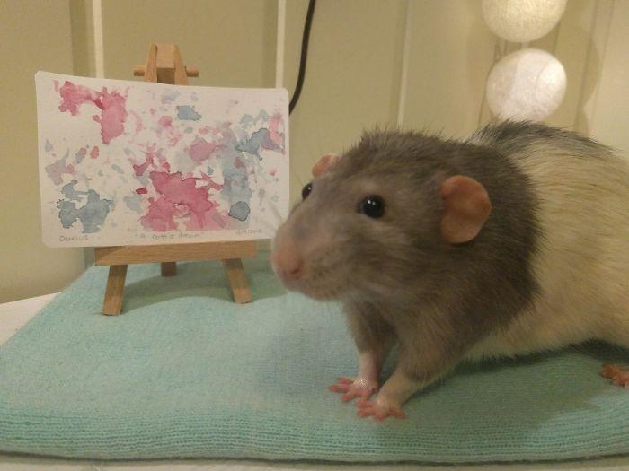 Se você ainda não sorriu hoje, conheça Darius, o rato que aprendeu a pintar