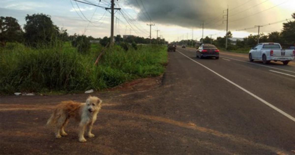 Cachorro perdido espera por seu dono no mesmo local por 4 anos, e finalmente estão reunidos