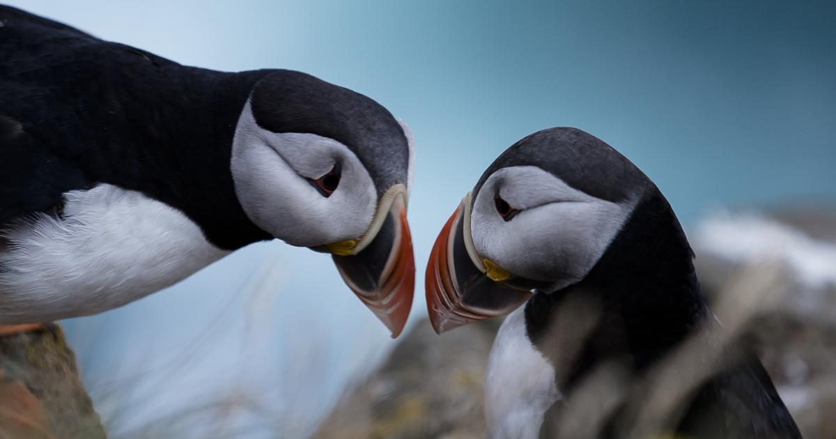 Fotógrafa captura as paisagens da Islândia em fotografia fine art