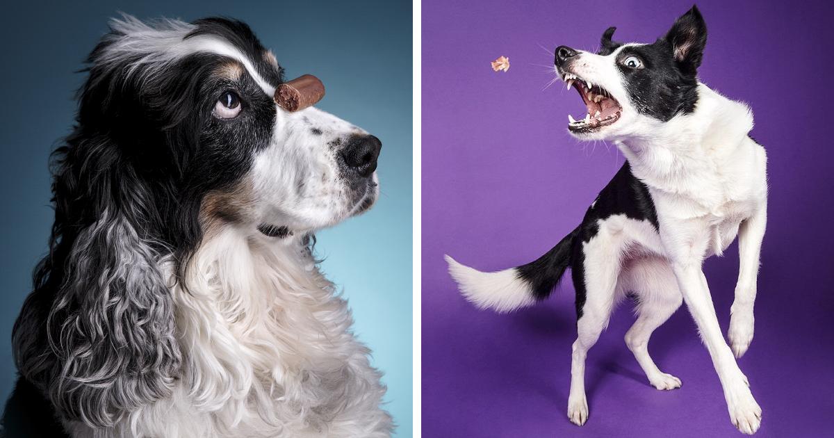 Fotógrafo captura reações engraçadas de cachorros na presença de comida