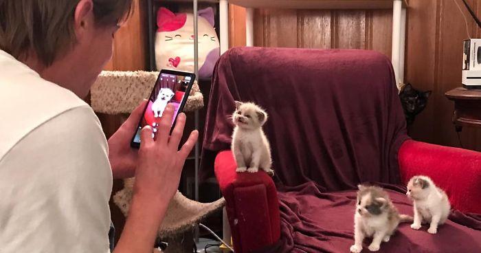 Gatinho adotado dá o sorriso mais fofo durante sessão de fotos e viraliza na internet