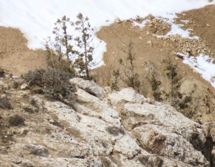 As pessoas percebem que os leopardos têm camuflagem durona quando tentaram encontrar um nesta foto