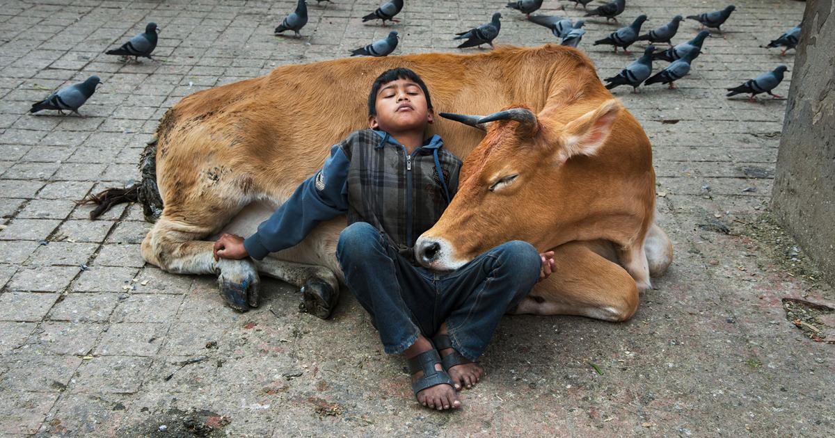 71 fotos que mostram a complexa relação entre seres humanos e animais