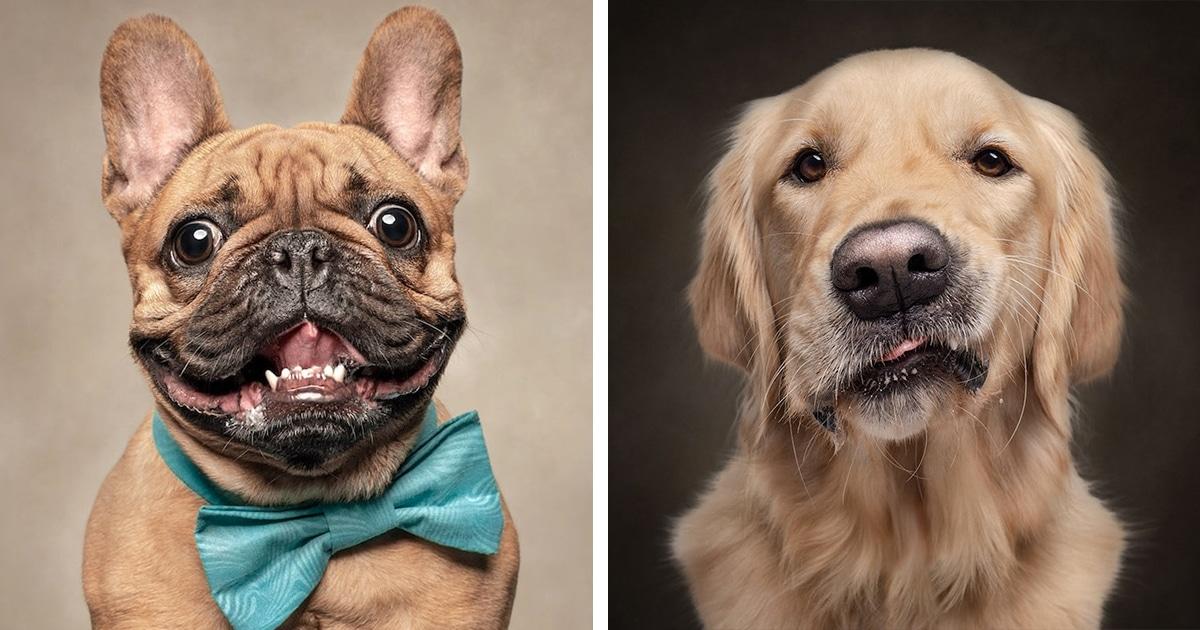 """19 adoráveis e expressivos rostos de cães revelam que são as """"melhores pessoas"""""""