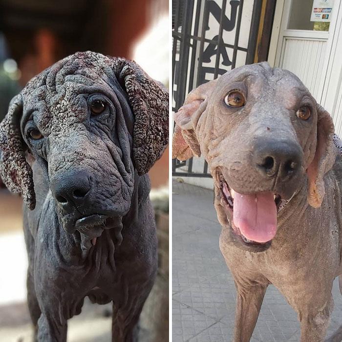 28 Fotos Antes E Depois De Cães Resgatados Que Mostram O Que O Amor Pode Fazer