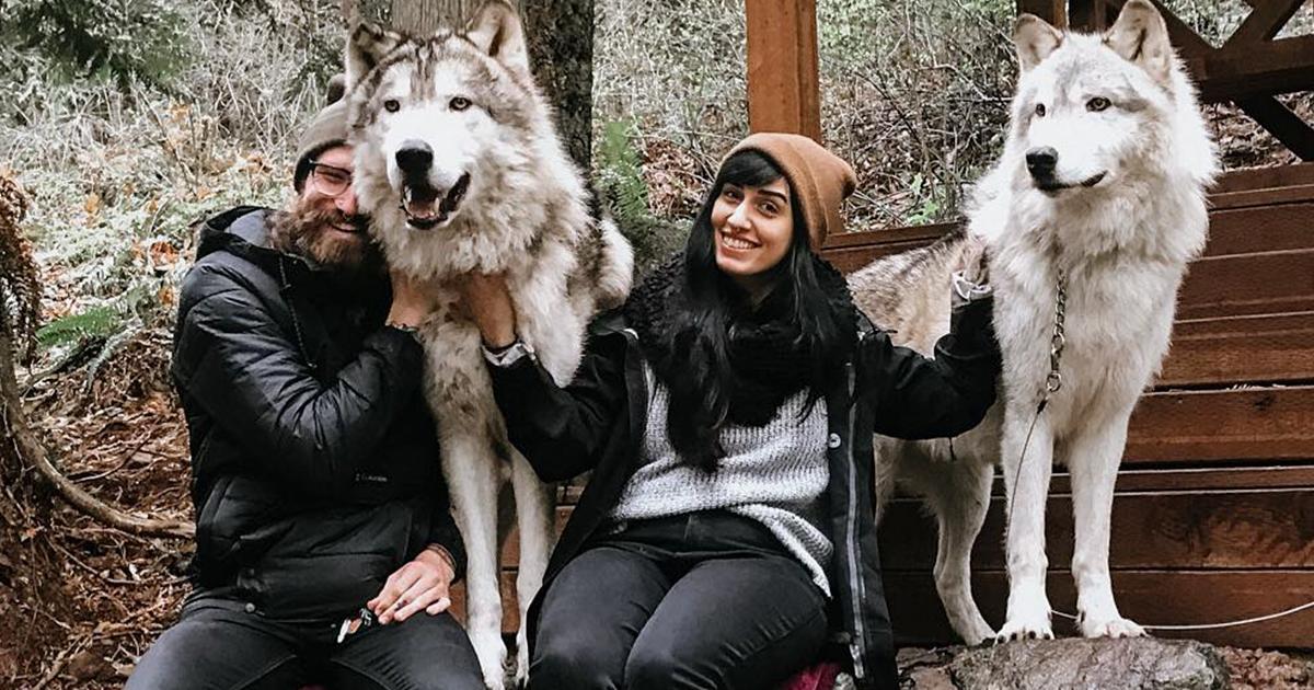 Conheça Este Santuário De Lobos Amigáveis Que Você Pode Visitar