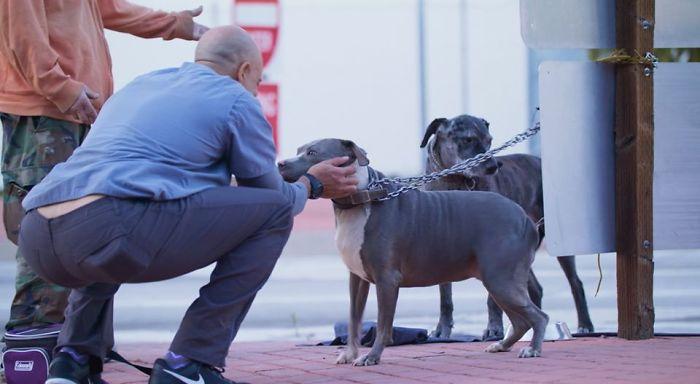 Este Veterinário Que Anda Pela Califórnia E Trata Os Animais De Rua Gratuitamente