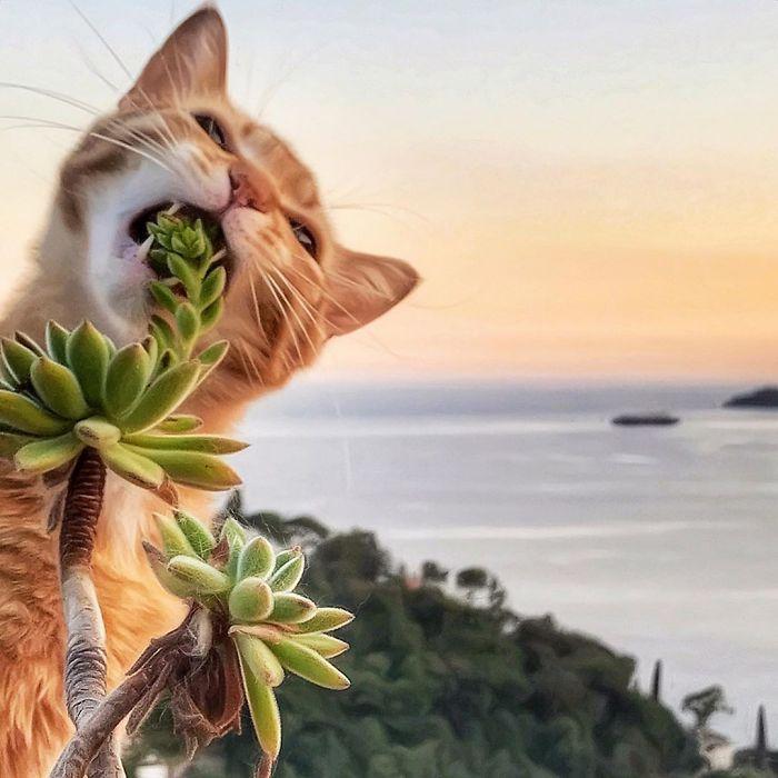 36 Fotografias Espontâneas E Engraçadas De Um Gato Capturadas Por Sua Dona