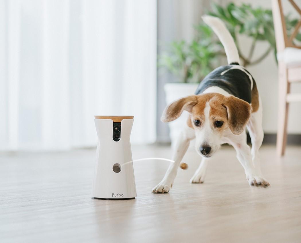 Com Este Dispositivo, Você Pode Alimentar Seu Pet E Se Divertir Com Ele Mesmo À Distância