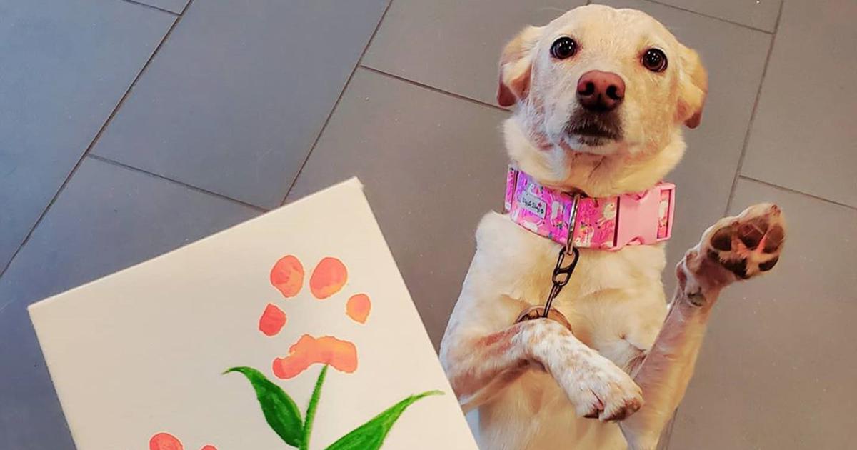60 Obras De Arte Adoráveis Feitas Por Cãezinhos Ainda Mais Adoráveis