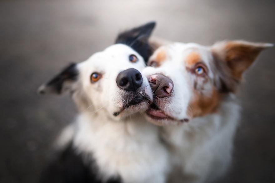 30 Fotografias Da Felicidade De Cachorros Ao Redor Do Mundo
