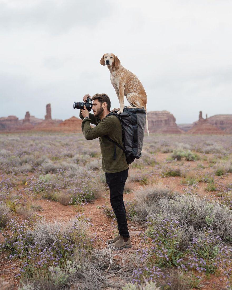 Aqui Estão 30 Fotos De Maddy, Uma Cadela Que Adora Viajar Com Seu Dono