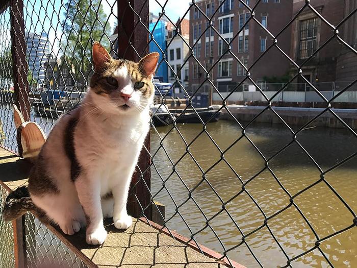 As Pessoas Estão Dizendo Que Este Santuário Flutuante De Gatos É A Melhor Atração De Amsterdã
